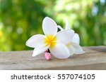 Tropical Flowers Frangipani ...