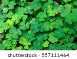 green background with three... | Shutterstock . vector #557111464