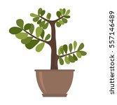 houseplant  palm  ficus ... | Shutterstock .eps vector #557146489
