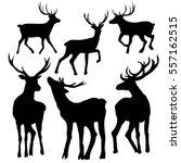 deer silhouette vector... | Shutterstock .eps vector #557162515