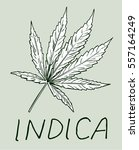 vector label with cannabis leaf   Shutterstock .eps vector #557164249
