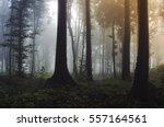 colorful forest landscape.... | Shutterstock . vector #557164561