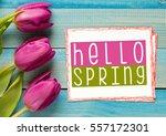 hello spring | Shutterstock . vector #557172301
