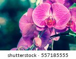 Closeup Of Orchids Flowers And...