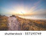 sunset at the danish dunes | Shutterstock . vector #557195749