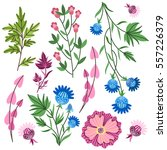 pattern nature. vector. flowers ... | Shutterstock .eps vector #557226379
