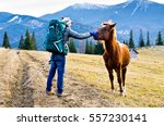 tourist meets a horse in the... | Shutterstock . vector #557230141