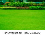 landscaped formal  front yard... | Shutterstock . vector #557233609