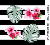 stripped pattern tropic pink... | Shutterstock .eps vector #557245069