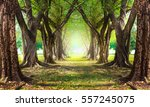 magic  forest green | Shutterstock . vector #557245075