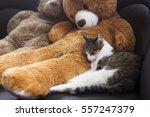 A Sweet Cat Sleeping Near A...