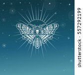 moth dead head. esoteric symbol.... | Shutterstock .eps vector #557292199