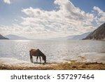 horse in napa lake shangri la... | Shutterstock . vector #557297464