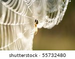 Spider On Web With Water Drops