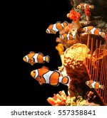 sea corals and clown fish in... | Shutterstock . vector #557358841
