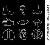 human_organs_senses_and_body_par... | Shutterstock .eps vector #557382655