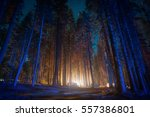 highlighted camp in the... | Shutterstock . vector #557386801