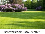 big  green lawn in the spring... | Shutterstock . vector #557392894