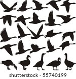 silhouette geese  black and... | Shutterstock .eps vector #55740199