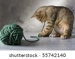 Stock photo kitten playing with a green wool ball on a marble surface and gray background 55742140
