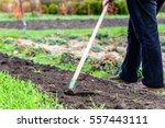 gardener raking soil with... | Shutterstock . vector #557443111