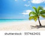 beautiful tropical white beach... | Shutterstock . vector #557462431