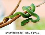 Постер, плакат: Green snake from Khao