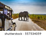 South Africa. Safari in Kruger National Park - African Elephants (Loxodonta africana)