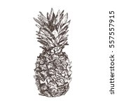 pineapple hand drawn in sketch... | Shutterstock .eps vector #557557915