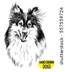 collie. drawing by hand in... | Shutterstock .eps vector #557559724