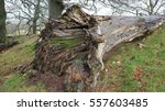 Fallen Tree Trunk In The...