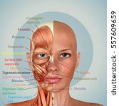 3d female face muscles anatomy | Shutterstock . vector #557609659