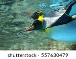 Emperor Penguin To Swim