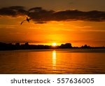 Pelican Flying At The Sunset O...