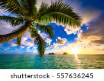 beautiful lanikai  kailua... | Shutterstock . vector #557636245