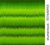 grass seamless pattern. vector. | Shutterstock .eps vector #557640955