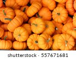 Many Miniature Vibrant Orange...