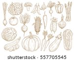vegetables set of leek ... | Shutterstock .eps vector #557705545