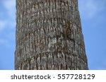 Lizard On Palm Tree