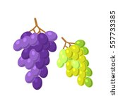bunches of grapes vector... | Shutterstock .eps vector #557733385