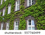 Covered With Ivy Wall Of House...