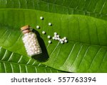 homeopathy   a homeopathy... | Shutterstock . vector #557763394