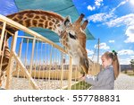 young funny giraffe and... | Shutterstock . vector #557788831
