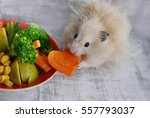 Stock photo hamster eating carrots 557793037