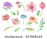 painted watercolor set of... | Shutterstock . vector #557808169