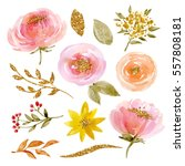 painted watercolor set of... | Shutterstock . vector #557808181