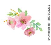 painted watercolor composition... | Shutterstock . vector #557808211
