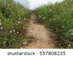 Sensitive Plant Or Mimosa...