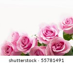 Flower Of  Pink  Roses On Whit...