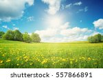 field with yellow dandelions... | Shutterstock . vector #557866891
